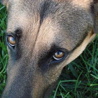 """""""Efecto refugio"""" Solo con nuestra presencia... ¿Podemos reforzar o amortiguar la reactividad en perros?"""