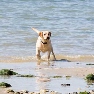 Vacaciones con #perros, 10 claves. Guía práctica para una Semana Santa perruna.