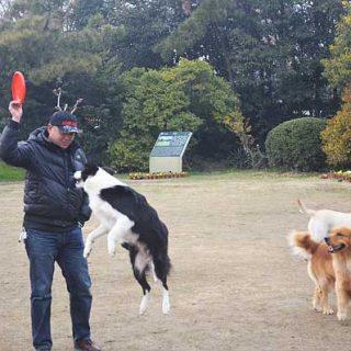 Los veterinarios británicos recomiendan como mascotas perros mestizos antes que de razas concretas.
