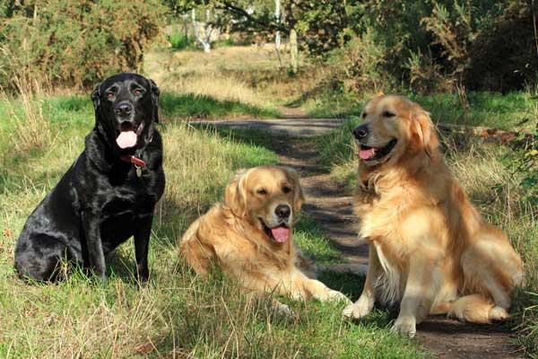 Perros y crisis, cómo ahorrar un buen puñado de euros. 5 formas de ahorrar con nuestros perros y 5 que no.