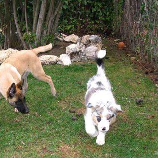 #Perros en el jardín, recomendaciones del American Kennel Club. Plantas peligrosas, y más...