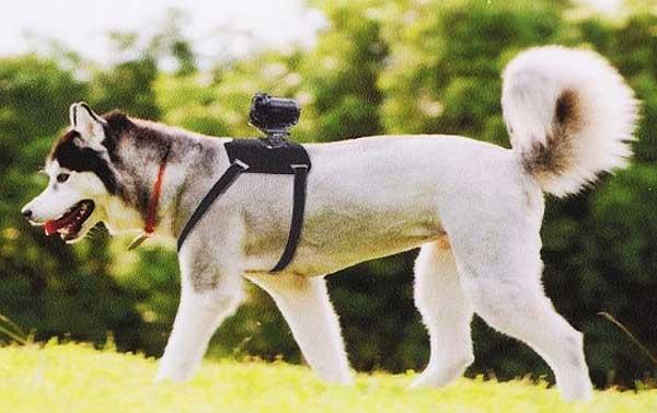 El accesorio AK-DM1 es un arnés que permite acoplar una cámara a los perros. Tomas espectaculares, pero también una gran ayuda en perros de rescate y trabajo.