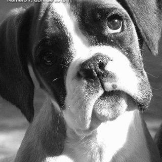 Doogweb, revista gratis número 7. Artículos de #perros de descarga gratuita.