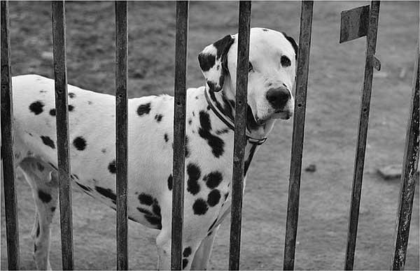 """Campaña """"Eres lo mejor"""", con el apoyo de Purina, que colabora en la iniciativa con la donación de 3.000 kilos de alimento para mascotas. @Purina."""