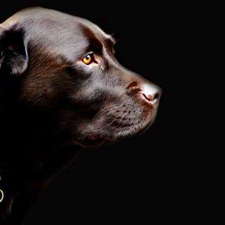 ¿Cómo se evalúa un perro para determinar si padece algún problema neurológico? #Veterinaria.