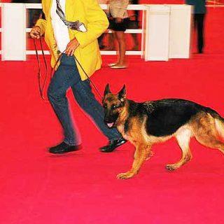 48 Exposición Canina Internacional de Bizkaia, próximo 14 de abril.