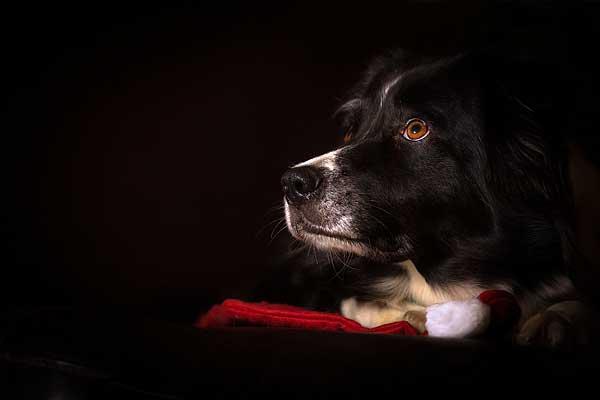 Hoy traemos a doogweb a Mathias Ahrens, fotógrafo alemán especializado en perros.