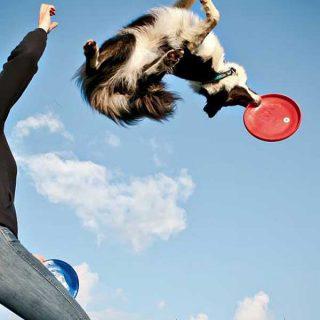 K9 Action, fantásticas fotografías de perros dog frisbee, agility y diversión.