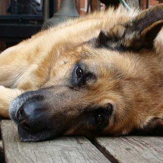 La esterilización influye en las causas de muerte de los perrros. #Veterinaria #perro.