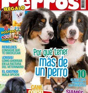 Revista #Perros y Compañía, mayo 2013: Cane corso, hogares multi perro, ahorrar en el veterinario...