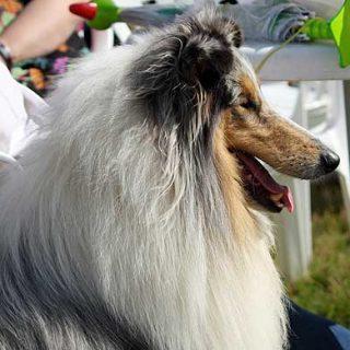 Las razas de los #perros pueden reflejar la personalidad de sus dueños. Los perros dicen bastante de nosotros ¿te ves reflejad@ en el estudio?