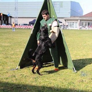 La perra madrileña Felina Aus Der Espensätte se alza en la Feira Internacional de Galicia como Campeona de España de Rottweiler en la modalidad de trabajo.