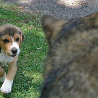 Los cachorros de las tiendas de animales sufren más problemas de comportamiento. Estudio de la AVMA.