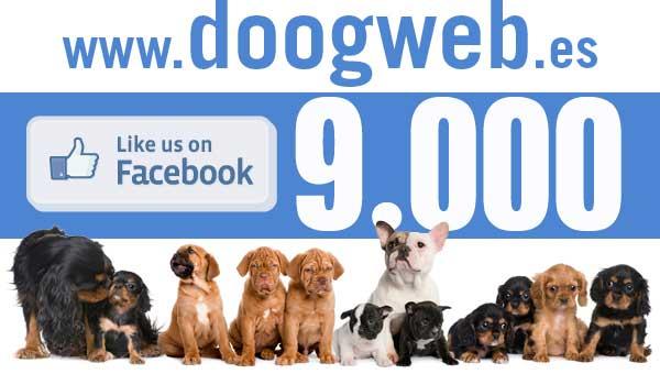@Doogweb en cifras. ¡Sómos 9.000 doogweber@s, gracias por visitarnos!