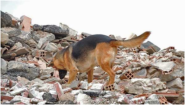 Homologados en Andalucía 12 perros para salvar vidas con Método Arcón el sistema de salvamento más eficaz y galardonado del mundo