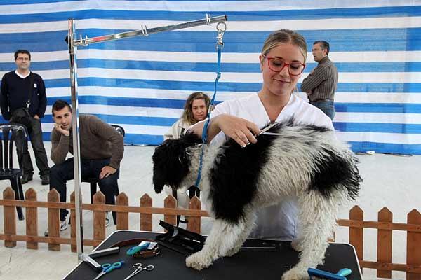 40 peluqueros caninos de distintos lugares de España participarán en el Campeonato Gallego que se celebrará en la Semana Verde de Galicia.