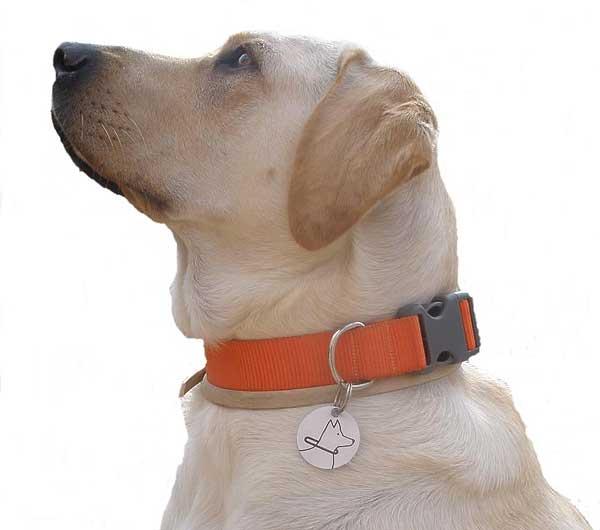 Eddie será el primer perro entrenado en la Comunidad Valenciana para asistencia de niños con trastorno de espectro autista.