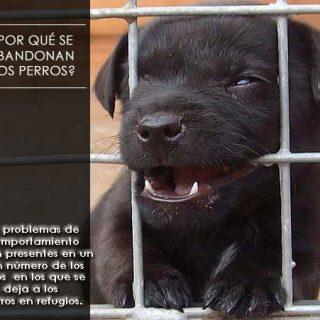 Los problemas de comportamiento en los perros son una de las causas principales del abandono.