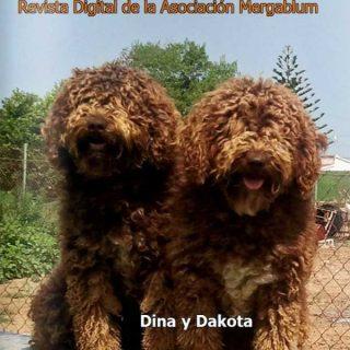 """Revista gratis """"El Perro de Agua"""", número 8. Ya disponible."""