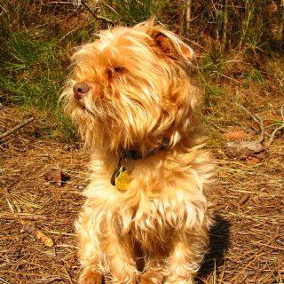 """El """"Día del perro sin raza"""" se celebra los 28 de mayo. Pero... ¿qué es un perro """"sin raza""""?"""