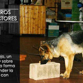 Perros detectores, trabajo, hobyy, deporte y actitud.