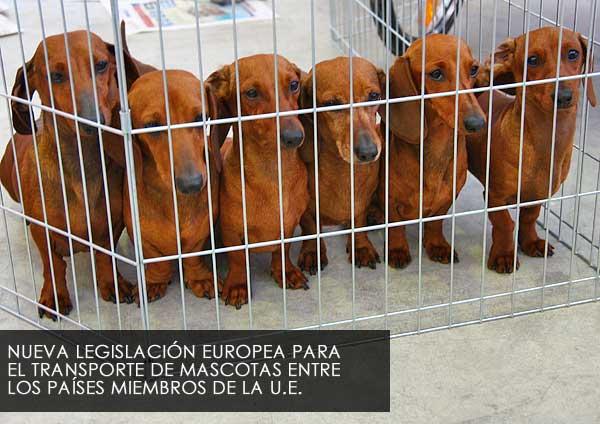 Nueva normativa para el transporte de mascotas en la UE.