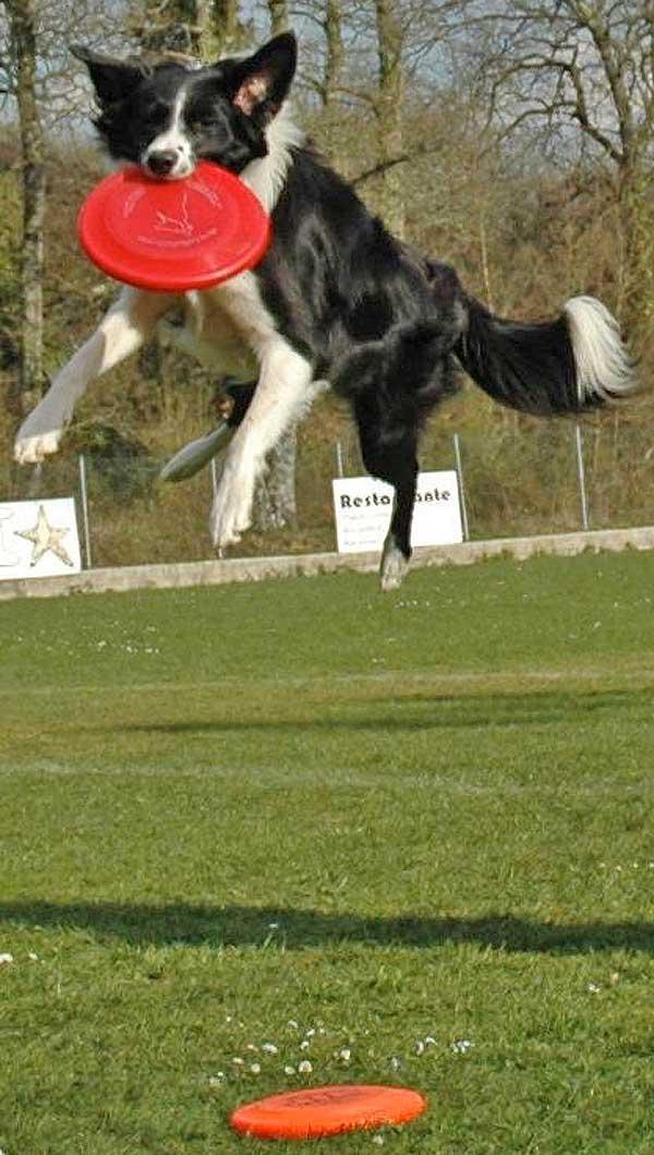 Dis Dog. Conceptos básicos para disfrutar con tus #perros. @Txakurtzen.