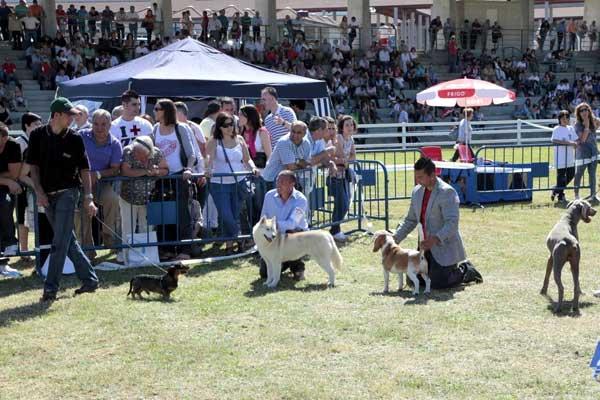 200 perros de 60 razas participarán en el XI Concurso Nacional de Belleza Canina de la feria Semana Verde de Galicia.
