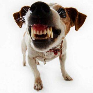 #Perros reactivos y agresividad canina: Intensidad, distancia y tiempo. Técnicas para tratar perros agresivos.