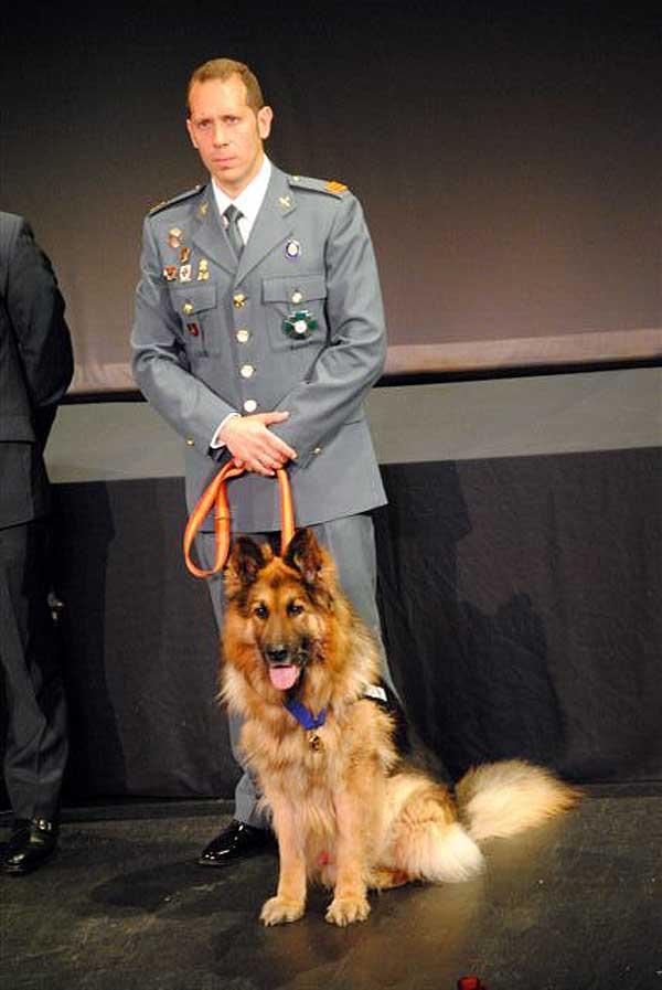 Un perro de la Guardia Civil recibe la medalla más importante que se concede a un animal por actos de valentía.