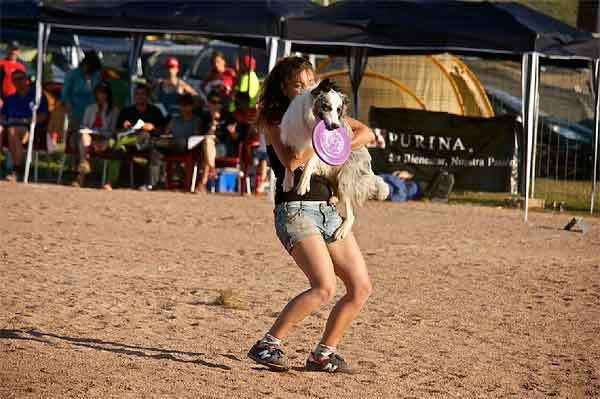 Purina Disc Cup USDDN Spain Qualifier, el Disc Dog, un deporte canino en auge. Por David Román.