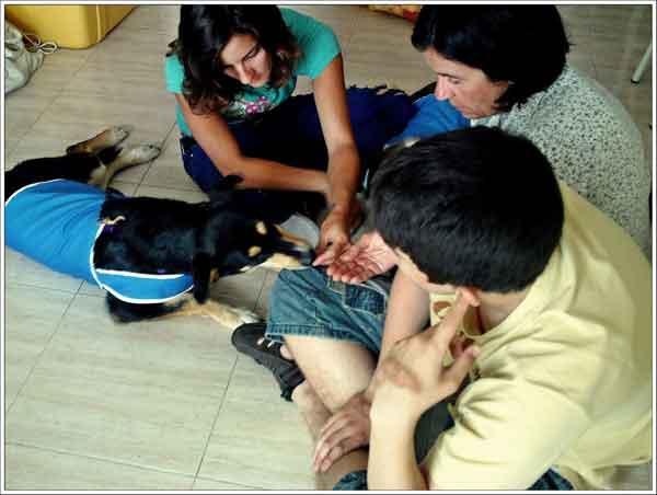 Cu4tro Patas+1, del albergue a perro de terapia... y la adopción. Perros de los albergues se adiestran para trabajar en TAA y se ofrecen en adopción.