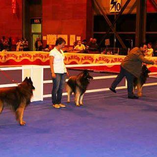 XIX Exposición Canina Internacional de Las Palmas, horarios, cómo llegar...