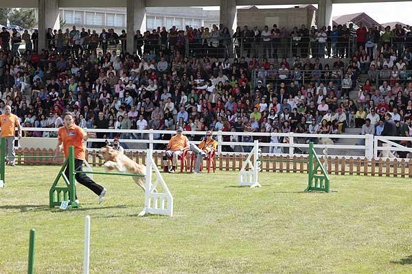 Más de 300 perros y 240 caballos participarán en una treintena de actividades en la Semana Verde de Galicia 2013.
