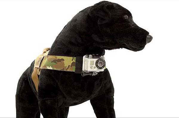 Arnés para acoplar una GoPro al arnés de los perros. ¡Acción!
