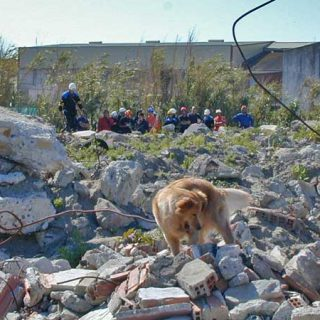 Rescate canino Método Arcón. Próximamente será establecida la Red de CIFHMAs en Latinoamérica.