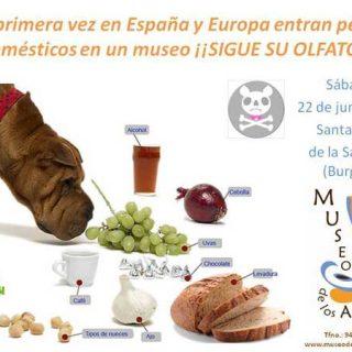 Próximo sábado 22 de junio, en el Museo de los Aromas (Aranda de Duero) se realizará una investigación para comprobar la superioridad olfativa de los perros.