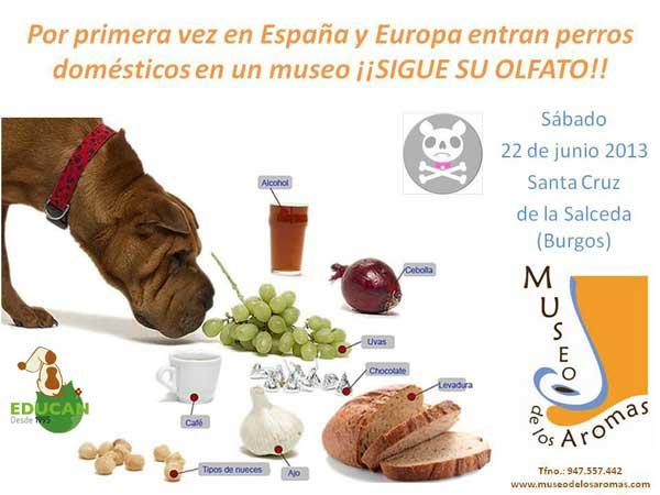 Próximo sábado 22 de junio, en el <strong>Museo de los Aromas</strong> (Aranda de Duero) se realizará una<strong> investigación para comprobar la superioridad olfativa de los perros</strong>.