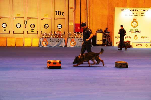 #Perros detectores de drogas ¿más problemas de comportamiento?