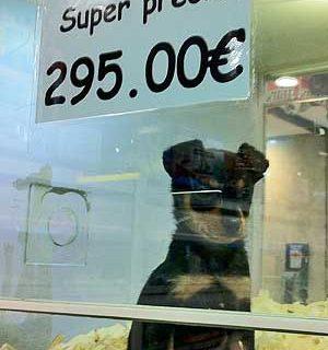 Toronto se une al selecto club de ciudades en las que está prohibido vender perros y gatos en tiendas.