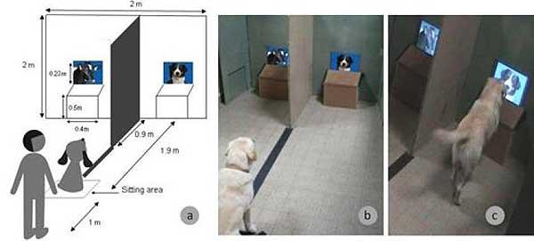 Los perros reconocen a otros perros ¿no?