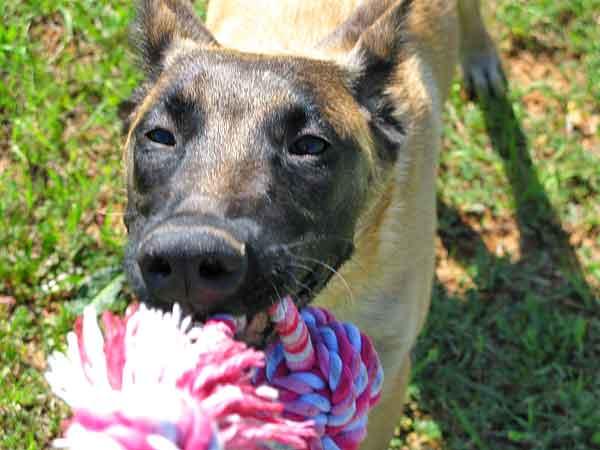 Los perros buscan seguridad en sus guías, exactamente igual a como hacen los niños con sus padres (estudio científico).