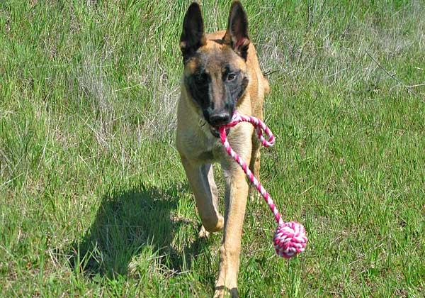 Hiperapego Vs vínculo Vs autonomía en el perro, vida real y adiestramiento avanzado.