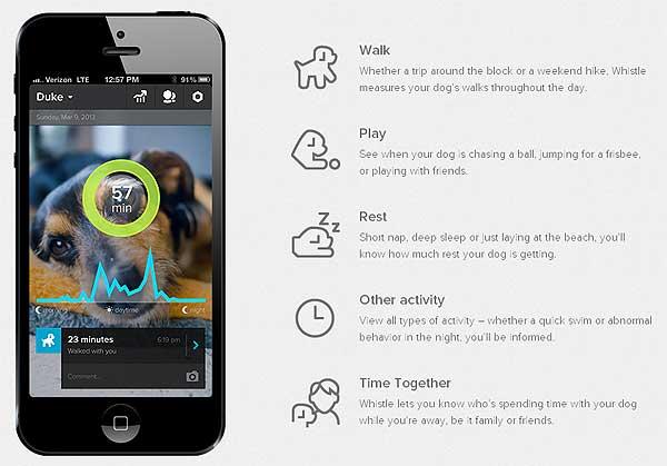 Whistle: Gadget perruno para monitorizar la actividad de los perros.