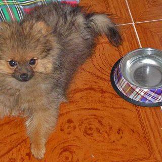 Aditivos en la comida para perros ¿los conoces? Si no es apto para humanos... ¿se lo darías a tu perro?