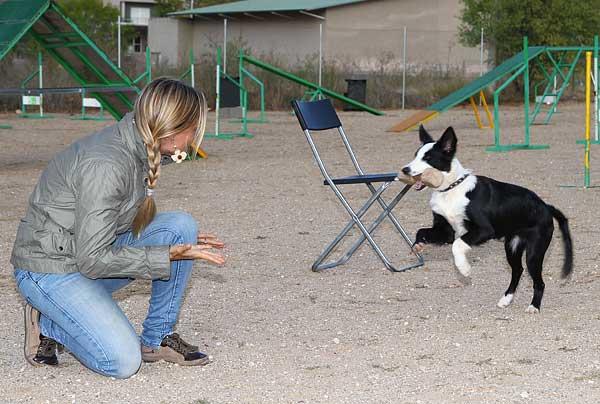 Imitación diferida y memoria declarativa en perros domésticos. Estudio de Miklosi/Fugazza, publicado en Animal Cognition.