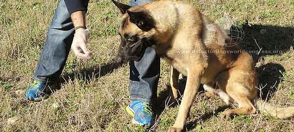 II Congreso Mundial de Perros de detección (DDWC2013), próximo mes de noviembre en Tarragona.