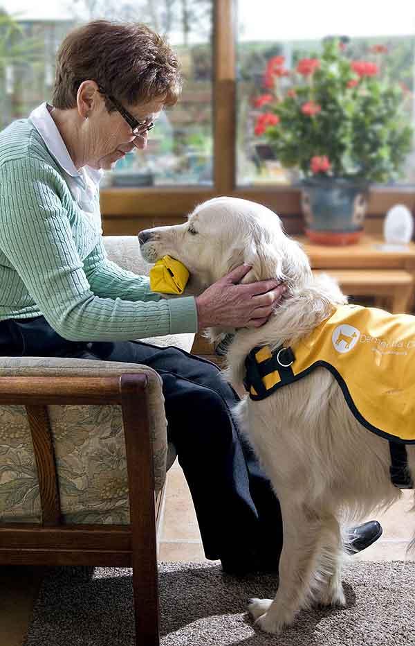 Óscar y Kaspa: Perros de asistencia/terapia especializados en enfermos de Alzheimer.