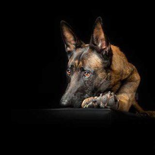 """Fotografía de perros... """"estrujando"""" el estudio (y captando el alma de cada perro)."""
