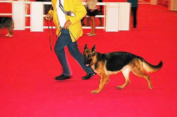 49 Exposición Canina Nacional de Bilbao, horarios, cómo llegar...